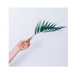 Hand with palm frond