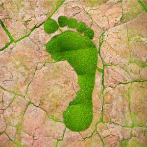 Green footprint on clay-baked soil