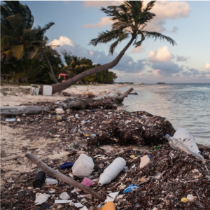 Plastic often winds up in our oceans